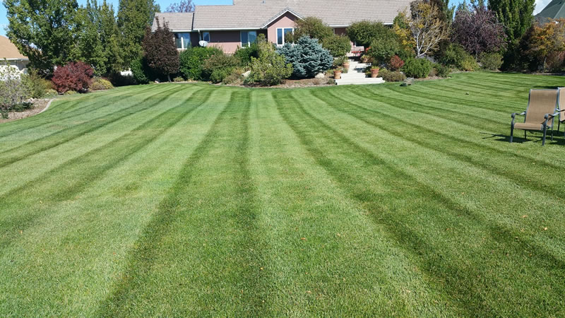 Lawn Fertilization and Weed Control Services